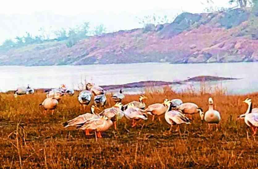 सतपुड़ा की वादियों में मिले सैकड़ों देशी-विदेशी पक्षी