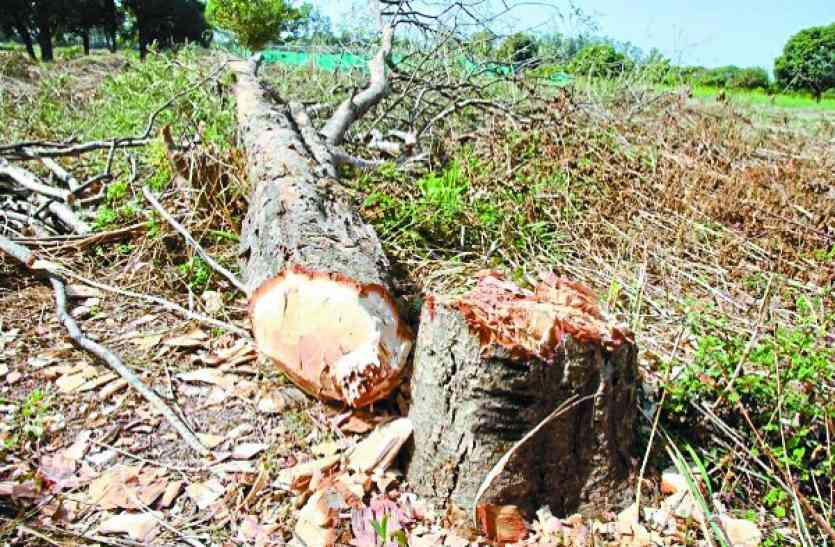 उद्यानिकी विभाग में ही फलदार वृक्षों का हो रहा यह हश्र, जिम्मेदारों को चिंता ही नहीं