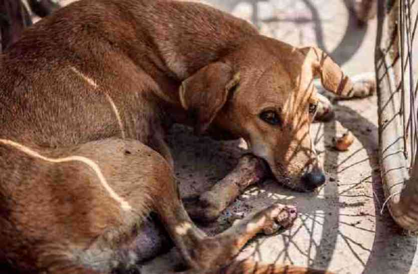 घायल कुत्तों को बचाने में अहम भूमिका निभाएगा ये मोबाइल ऐप, आज ही करें डाउनलोड