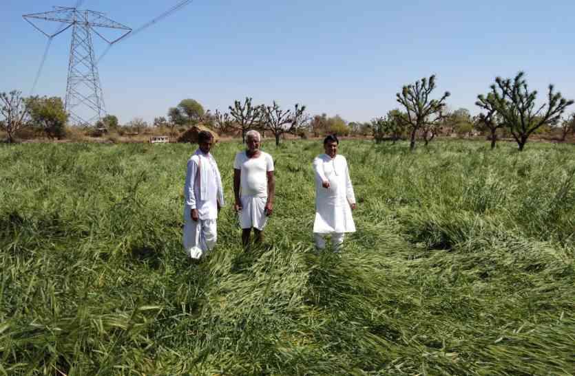 कृषि विभाग ने माना, 5724.9 हैक्टेयर में प्रभावित हुई फसलें