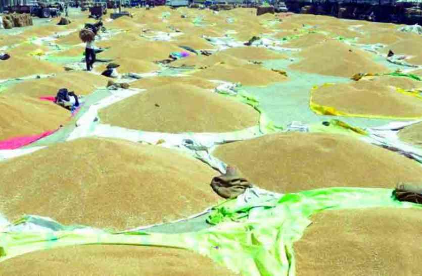 GOOD NEWS  : अब गिलूण्ड, कुरज में खुलेंगे गेंहू तोल केन्द्र, किसानों को मिलेगी राहत