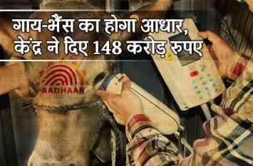 गाय-भैंस का भी होगा आधार कार्ड! केंद्र ने दिए 148 करोड़ रुपए