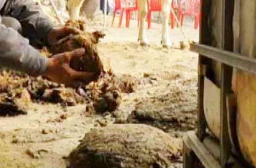 गाय के गोबर को लेकर दो पक्षों में मारपीट, व्यक्ति की हत्या