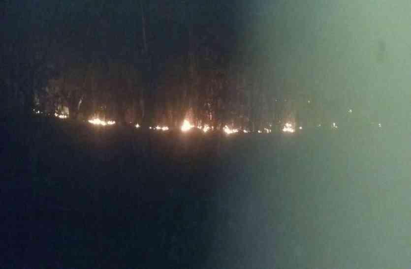 Breaking: बागनदी जंगल में लगी भीषण आग, लोगों की सूचना पर भी नहीं पहुंचा वन विभाग का अमला, Video