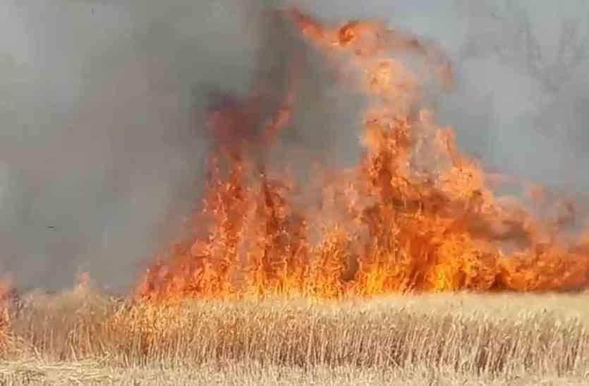 आग ने शुरू किया तांडव, 27 एकड़ की खड़ी गेहूं की फसल जलकर खाक