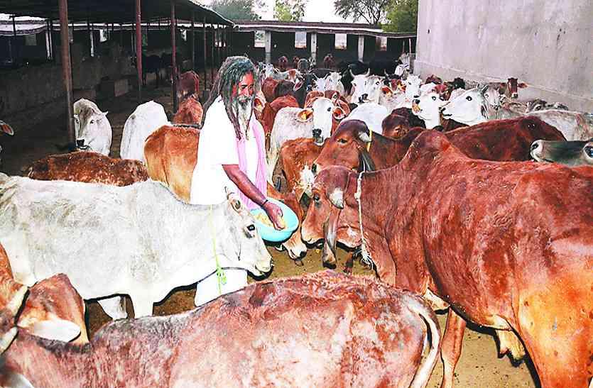 जन सहयोग से कर रहें है गायो की देखभाल