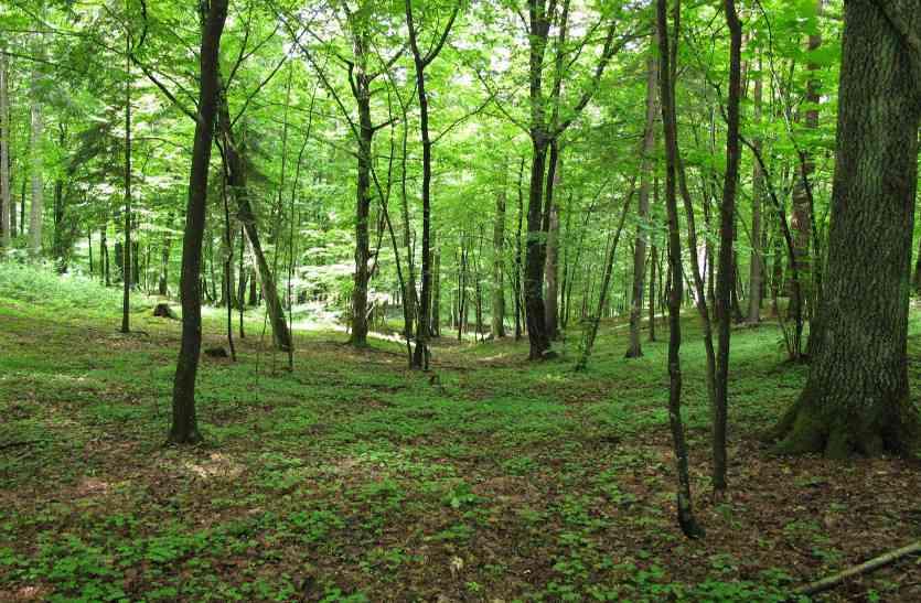 वन विभाग की जमीन पर फर्जी पट्टे जारी करने का मामला