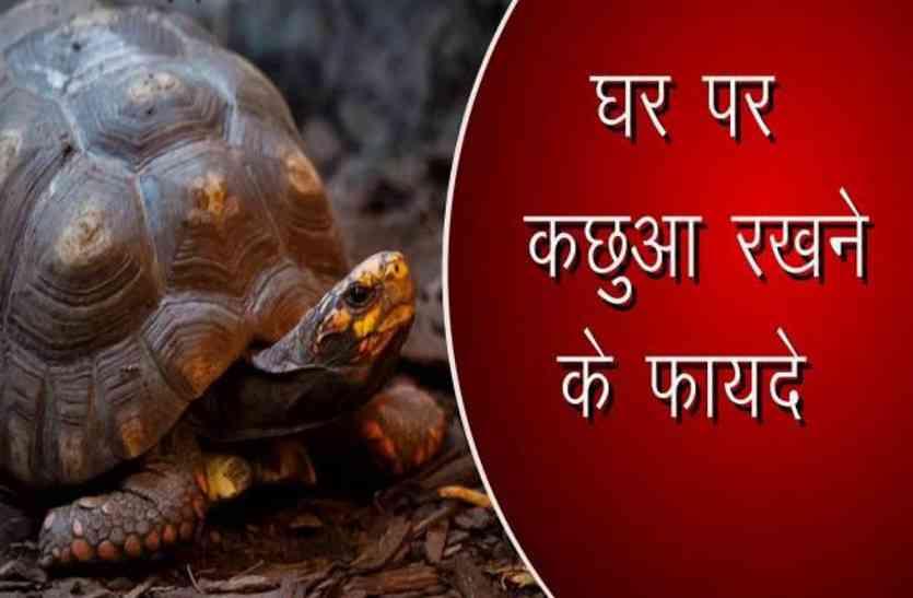 tortoies
