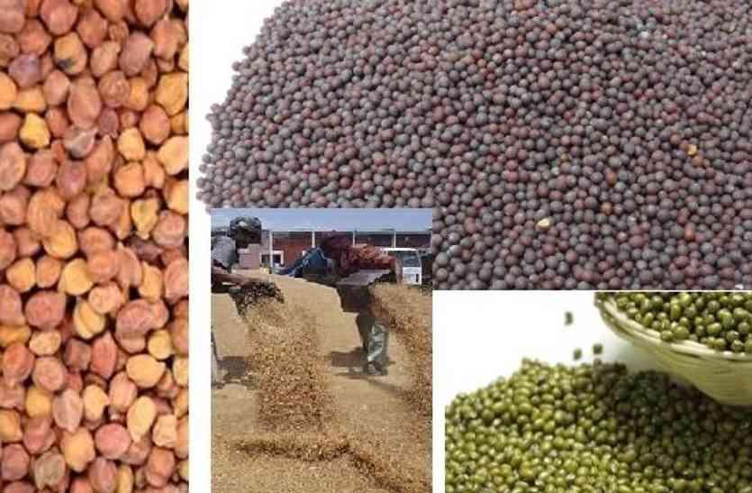 राजस्थान के किसानों के लिए खुशखबर, 12 मीट्रिक टन सरसों चना की खरीद होगी