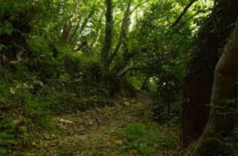 वन दूतों से करायी जाएगी जीवित पौधों की गणना