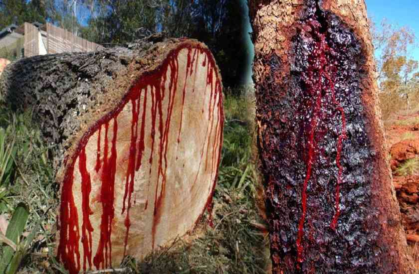 South Africa,Africa,deforestation,malaria,magical,Breast Milk,traditionally,human blood,medical conditions,