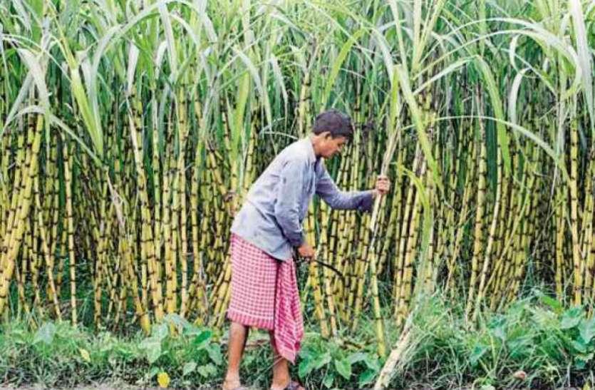 ऐसा बोया गन्ना कि जीत गए पुरस्कार - गन्ना पैदा करने में लखीमपुर और बुलंदशहर के किसान विजयी