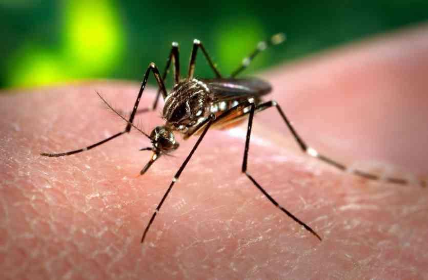 डेंगू का मरीज आया सामने, हरकत में आया स्वास्थ्य विभाग