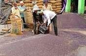 किसानों को दोहरी मार, मुआवजा ऊंट के मुंह में जीरा, साहूकार ले गए सरसों