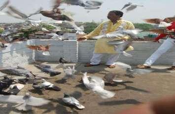 140 किलोमीटर की रफ़्तार से उड़े कबूतर देखें तस्वीरें
