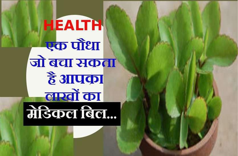 एक पौधा जो बचा सकता है आपका लाखों का मेडिकल बिल...
