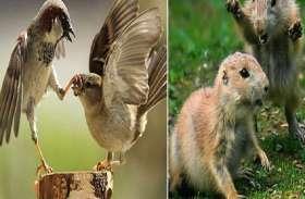 अपने दिल की भड़ास निकालते हुए प्यारे जानवरों की तस्वीरें वायरल!
