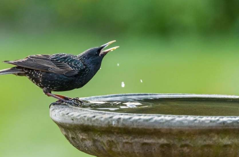 पत्रिका डे स्पेशल: पानी से भरेंगी तलाइयां, बुझेगी पशु और पक्षियों की प्यास
