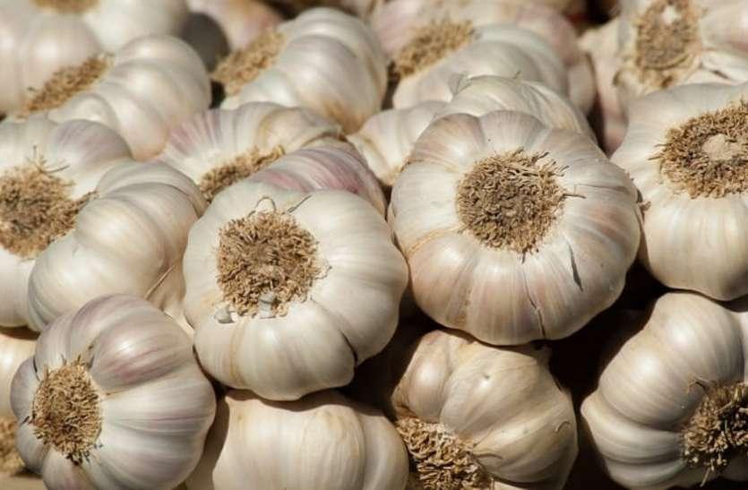 अब लहसुन पर किसानों को 800 रुपए प्रति क्विंटल का बोनस