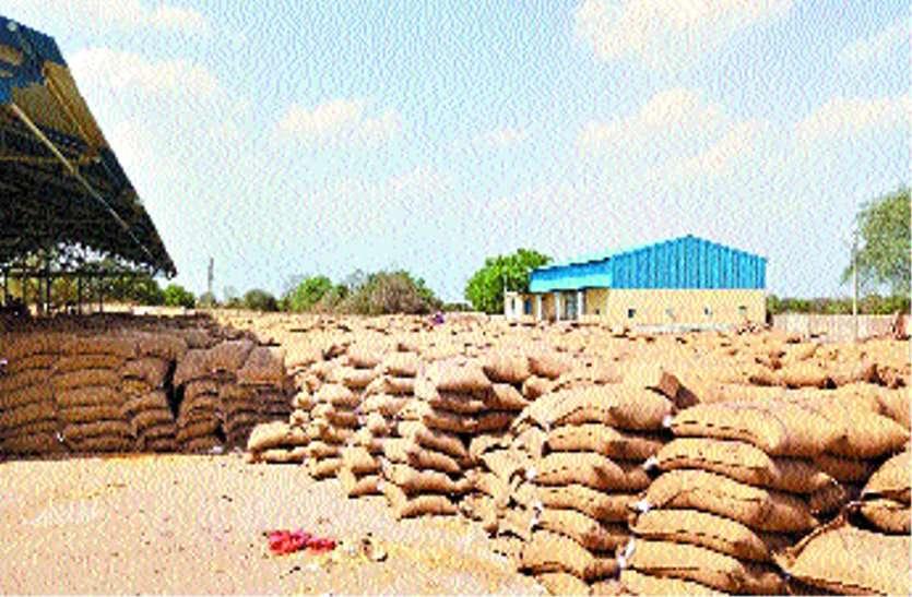 कुंडाली में भी होगी गेहूं की खरीदी