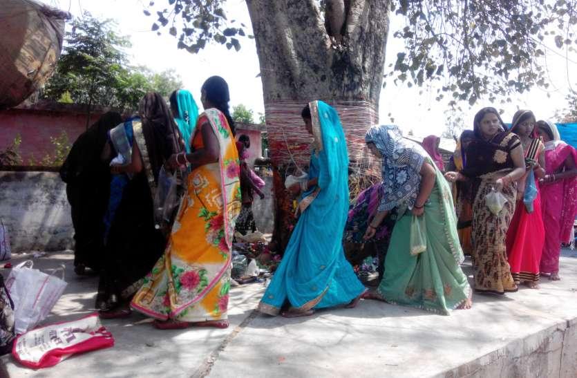 सदा सुहागन की कामन लिए महिलाओं ने पीपल वृक्ष के लगाए १०८ फेरे, सूत्र बांध की विशेष पूजा