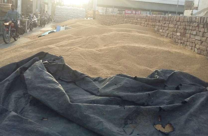 धान मण्डी में कृषि जिन्सों की आवक बढ़ी