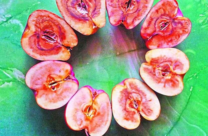 सुपर क्वालिटी का लेबल और सड़े निकल रहे सेब