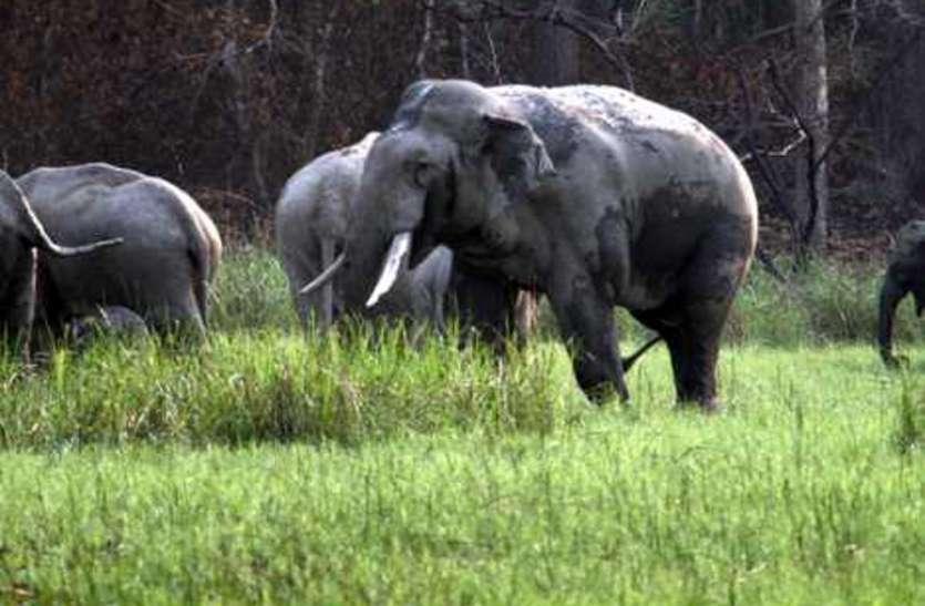 अब कर्नाटक के हाथियों से गुलजार होगा दुधवा, मिला बड़ा तोहफा