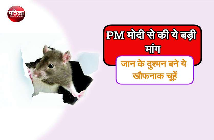 खौफनाक चूहों के आंतक से फैली सनसनी, युवक ने पीएम मोदी को पत्र लिखकर की ये बड़ी मांग