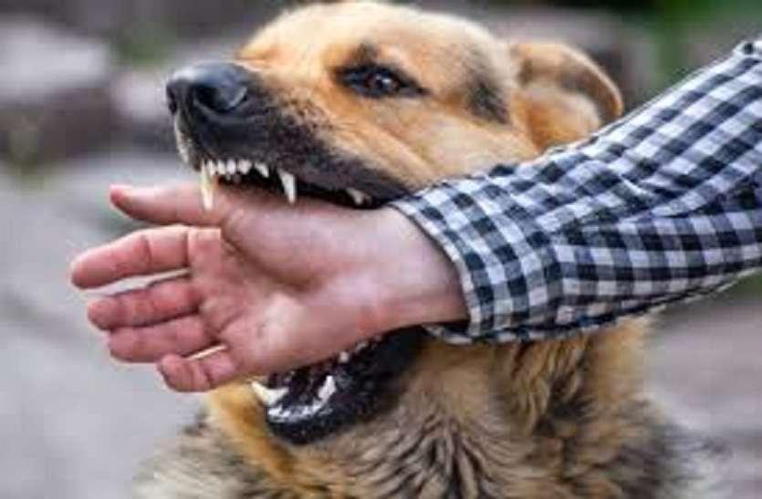 संभल में जंगली कुत्तों का आतंक,अब तक तीन की मौत, एक दर्जन की हालत नाजुक