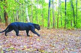तेंदुआ के दिखाई देने से क्षेत्र में फैली दहशत