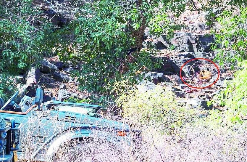 समय से पहले पहुंच गई पार्क में जिप्सी,बाघ पर्यावास में ले जा रहे पर्यटक