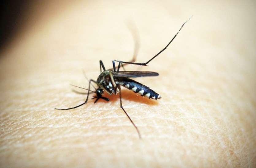 World malaria day:4 साल में बढ़े400 मरीज, सतना हाइफोकस जिलों की लिस्ट से बाहर
