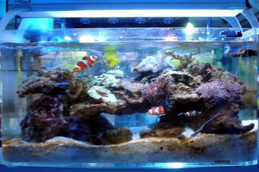 vastu benefits of fish aquarium at home