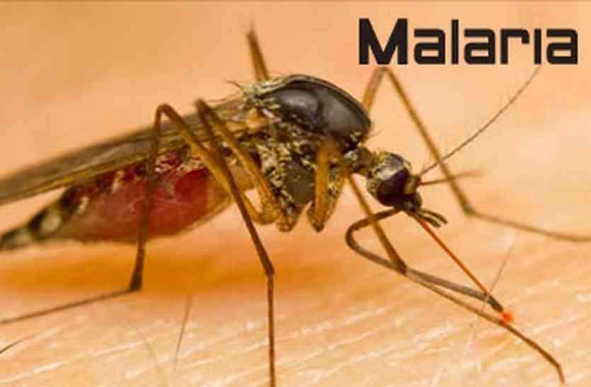 WORLD MALARIA DAY : गांवों से ज्यादा, शहर में पनप रहे मलेरिया के मच्छर, सुखाडिय़ा विश्वविद्यालय के सर्वे में हुआ खुलासा