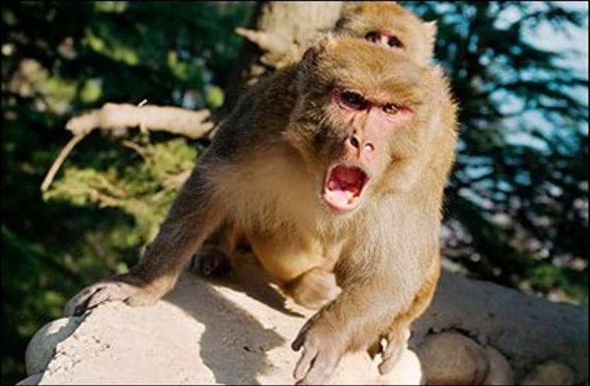 बंदर और कुत्तों से परेशान एम्स के डॉक्टरों ने मेनका से मदद मांगी