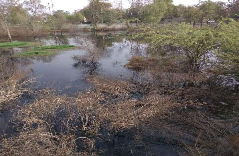 अलवर में खत्म करने के नाम पर इस तरह दे रहे हैं प्रदूषण को बढ़ावा, प्रशासन जानकर भी मौन