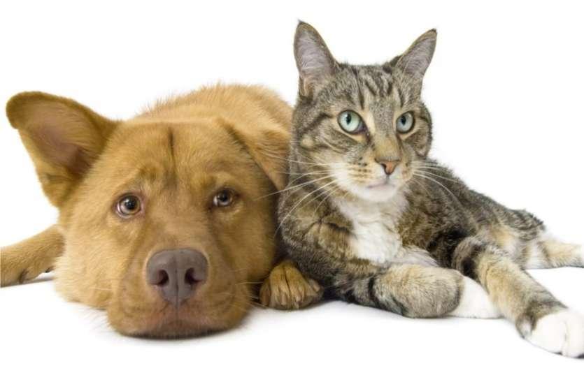 घर में जानवर पालने से पहले जान लें, क्या वो शुभ है