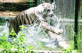 होम मेड स्वीमिंग पूल का आनंद ले रहे जंगल के राजा, फौव्वारे में मजे से नहाते हैं यहां हिरण