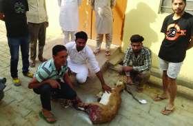 Video: कुत्तों के काटने से घायल हुआ हरिण