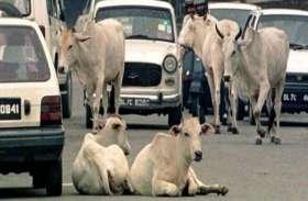 भारत में कैसे चल पाएंगी ड्राइवर लैस कारें...