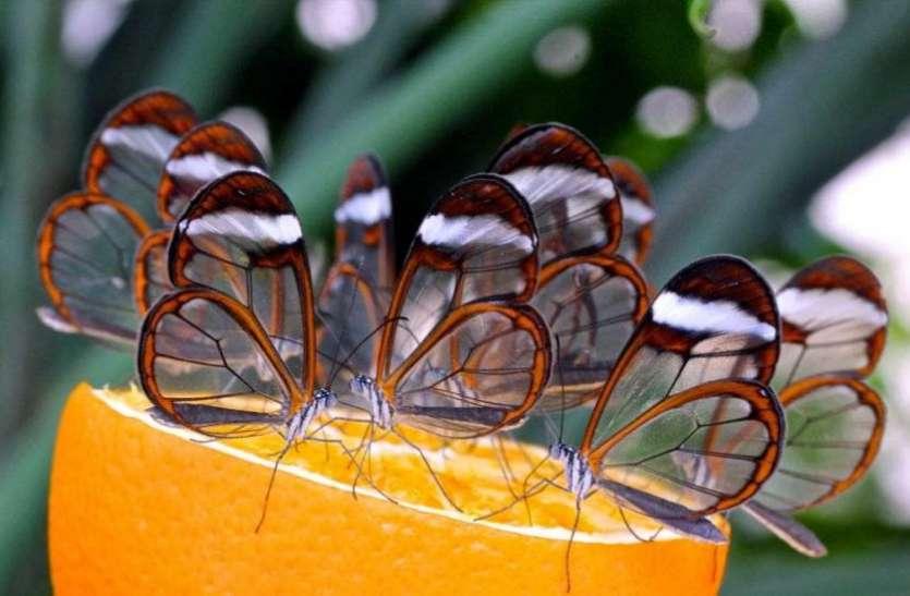 इस शहर में पाई जाती हैं दुनिया की सबसे खूबसूरत तितलियां, इसलिए हो रही चर्चा