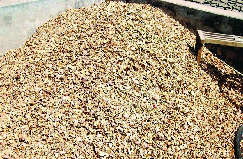 डोडा-चूरा जलाने पर किसानों को प्रति किलो 125 रुपए देगी सरकार, कैबिनेट के लिए तैयार हो रहा प्रस्ताव.. देखें पूरा मामला!