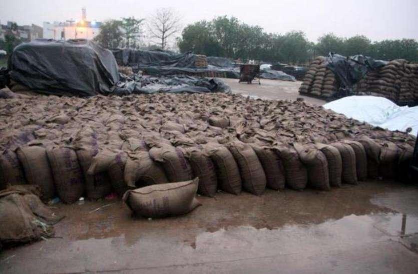 हजारों टन गेहूं बर्बाद होने की कगार पर, चेतावनी के बावजूद नहीं जागा प्रशासन