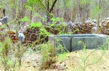 आबादी में घुसने को इसलिए मजबूर ये वन्य जीव,  राम भरोसे इनकी सुरक्षा