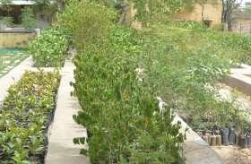 वन विभाग की पौधशालाओं में तैयारी,सागवान फिर लौटाएगा समृद्धि  जिलेभर में फैलेगी हरियाली की चादर