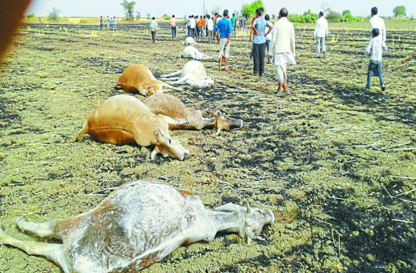 अंधड़ में गिरी जर्जर हाइटेंशन लाइन, चपेट में आईं गाय, आठ की मौत, दो झुलसीं