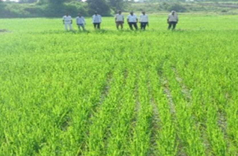 खेत पाठशाला से मिली जानकारी ने कृषक शिवप्रसाद सिंह का बदल दिया जीवन
