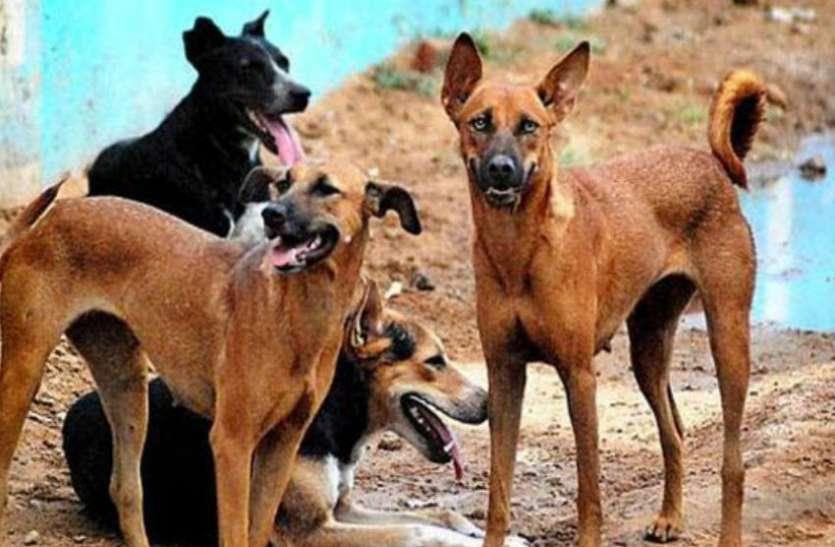 सीतापुर ही नहीं, पूरे यूपी के कुत्ते हो सकते हैं नरभक्षी, जानिए क्या है कारण