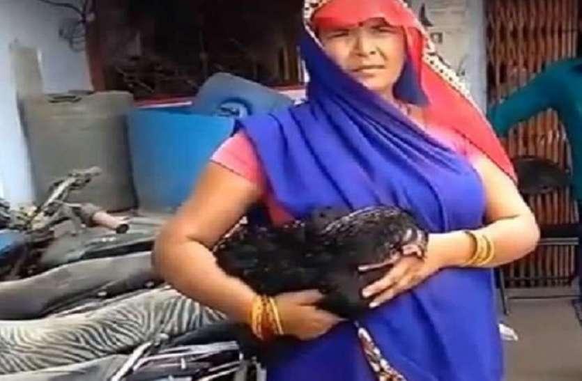 मुर्गी की हत्या के बाद आरोपी पड़ोसी फरार, पोस्टमार्टम रिपोर्ट में हुआ चौंकाने वाला खुलासा